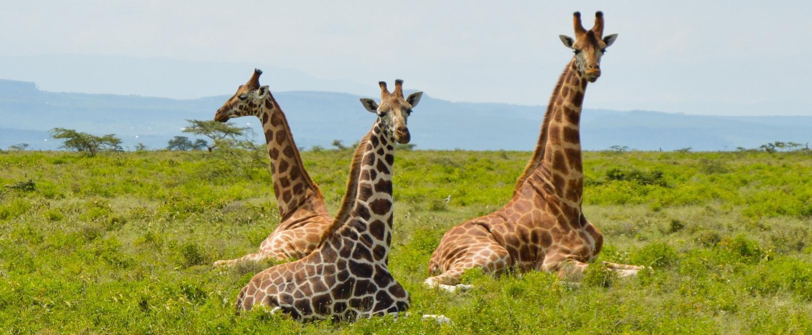 Safari privado en Kenia con extensión a Chale Island